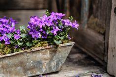 #garden #flowers #terrain