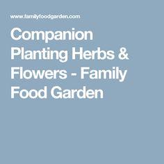 Companion Planting Herbs & Flowers - Family Food Garden