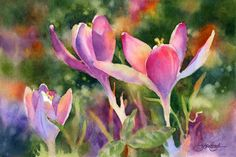 Floral Watercolors Gallery, Susan Crouch watercolor