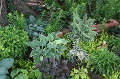 bonita seleccion de plantas tapizantes para el  jardin