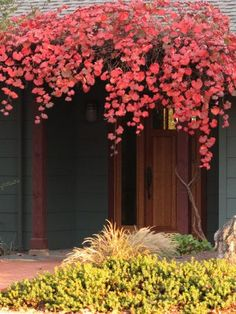 rogers califonia grape  , prachtig
