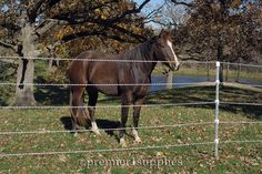 5 Strands of Endurasoft rope make a beautiful and safe permanent or temporary fence for horses.