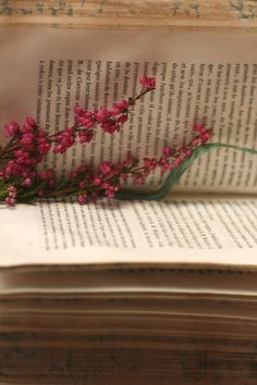 Many of my books have dried flowers in them - love it