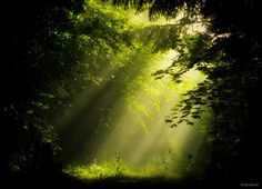 ***Shafts of light in the forest by Chiara Andolfatto (Italy)