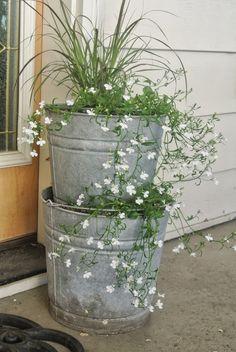 DIY Galvanized bucket planter —————————————— Find the galvanized planters in our shop Flower Planters, Garden Planters, Flower Pots, Flowers, Container Plants, Container Gardening, Galvanized Planters, Lawn And Garden, Belle Photo