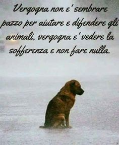 Assolutamente vero Cute Cats And Dogs, I Love Dogs, Animals And Pets, Cute Animals, Beautiful Creatures, Animals Beautiful, Dog Phrases, Different Dogs, Magic Words
