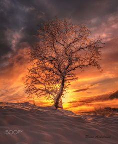 Winter backlight ..... by Rune Askeland on 500px Please check out: http://TheThrillSociety.com It's wicked Thrilling!
