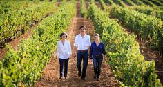 The Combard Family, St Andre www.bcfw.co.uk Fine Wine, Wines, Vineyard, Around The Worlds, Facts, Couple Photos, Blog, Couple Shots, Vine Yard