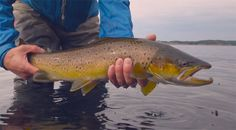 """Video: """"The Sea Trout of September"""" in Sweden - Orvis News"""