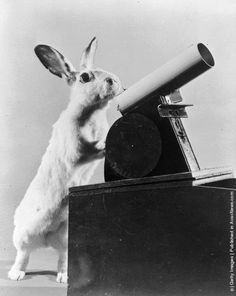 Carrots the rabbit fires table tennis balls from a toy cannon. (Photo by Evans/Three Lions/Getty Images). Circa 1956