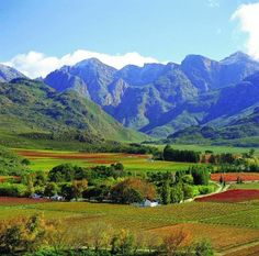 Mountain and Vineyards - Western Cape, South Africa Mama Africa, Out Of Africa, South Africa Safari, Cape Town South Africa, Africa Fashion, Africa Nature, Africa Art, Westerns, Namibia