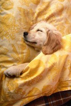 Beauty Sleep is So Important