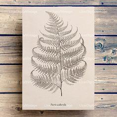 Vintage clip art Vintage prints Botanical print Fern