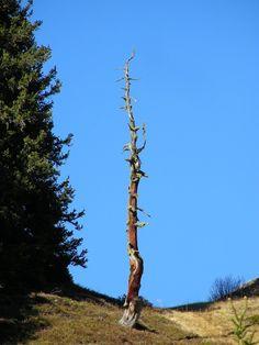 Blitzeinschlag - Sattelwald - Kappl Utility Pole, Mountains, Nature, Travel, Woodland Forest, Art, Voyage, Viajes, Traveling