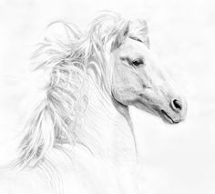 A very beautiful drawing/sketch of the horse....the most gorgeous animal on this planet!