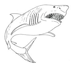 Realistic Shark Coloring Pages from Animal Coloring Pages category. Printable coloring pictures for kids that you can print and color. Have a look at our selection and print the coloring pictures free of charge. Penguin Coloring Pages, Fall Coloring Pages, Free Coloring Sheets, Coloring Pages For Boys, Coloring Pages To Print, Coloring Books, Baby Great White Shark, We Draw Animals, Captain America Coloring Pages
