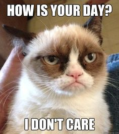 XD . - Via Good Day Grumpy Cat