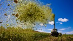 Crop flops: GMOs lead ag down the wrong path By Tom Philpott (mother jones)