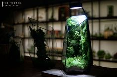 Pre-order: The Vertex ZERO L Pre-designed Completed | Etsy Rare Roses, Big Battle, Moss Terrarium, Moss Wall, Organic Matter, Glass Vessel, Lights Background, Natural Light, Pure Products