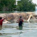 En la remota isla de Seram un poblador percibió de noche lo que creyó que era un barco abandonado. Se sorprendió al corroborar lo contrario