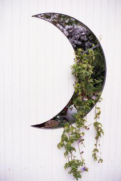 moon / garden