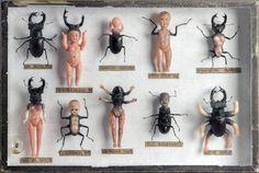 """ghostofaflea: """"  Le cabinet de curiosités de Laurent Gauthier : """"Manipulations"""" 2013 """""""