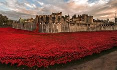 Should the poppy installation stay for longer? Photograph: Massimo Crisafi/GuardianWitness