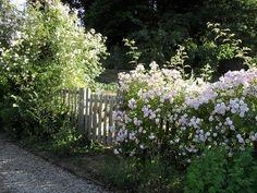 flowers covering picket fence w/ gate