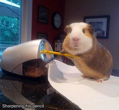 Stuff my guinea pig does. Follow this link and look at all of them. Hilarious!