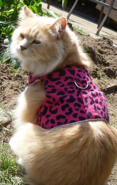 Pet Harness Wild Print by ScotsPlace on Etsy, $18.00