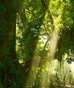 Tempranera luz del amanecer en el Parque de la Exótica Flora Tropical. Yaracuy, Venezuela