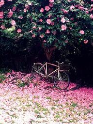 pink flowers, pink bike.