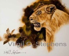 This one is a portrait of an African Queen that we saw in Africa,  giclee print of an African lion by Virgil C. Stephens Western Artist