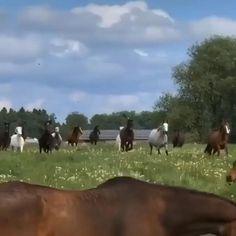 Beautiful Horses, Animals, Pretty Horses, Animales, Animaux, Animal, Animais