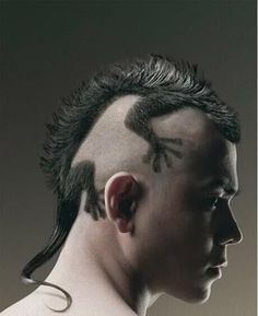 Google Image Result for http://www.coolestphotos.com/wp-content/uploads/2012/07/Gecko-Hair.jpg