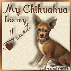 <3 Heart My Chihuahua <3