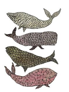 #whales