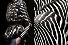 Balmain Fall 2014 and Zebras