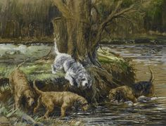 """The modern form of the Otterhound most likely took shape late in the 18th century, but there is little doubt that """"otter dogges"""" in England date back to the 12th century when the first record of otter hunting was recorded during the reign of Henry II. Though we find Otters charming today, they were considered vermin in Henry's time because they competed with fishermen for the natural trout supply in rivers and lakes, and devastated fishponds, an important source of food stocks especially…"""