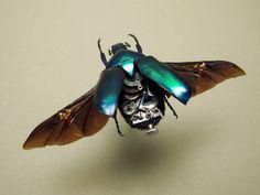 Amazing entomology and steampunk