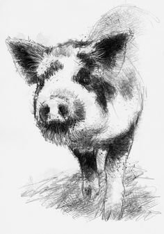 Spotted piglet, Artist Sean Briggs producing a sketch a day, prints available at https://www.etsy.com/uk/shop/SketchyLife  #art #drawing #http://etsy.me/1rARc0J #piglet
