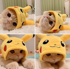 Pika Catto San - your daily dose of funny cats - cute kittens - pet memes - pets in clothes - kitty breeds - sweet animal pictures - perfect photos for cat moms Cute Kittens, Cute Baby Cats, Cute Little Animals, Cute Funny Animals, Cute Babies, Ragdoll Kittens, Tabby Cats, Bengal Cats, Funny Cute Cats