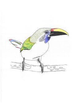 Sketch_toucan_07