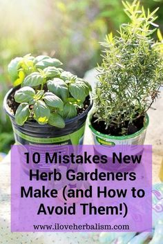 Herb gardening tips for beginners - So you're thinking of herb gardening, or maybe you tried it last year and it was an utter disaster? Have no fear. There are a few simple mistakes that many herb newbies make (and I know, because I made most of 'em myself). Master these simple and practical tips for herb gardening and you'll be using your own fresh #herbs like Mario Batali in no time.