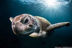 Adéntrate en lo más profundo de la naturaleza con estas impactantes imágenes