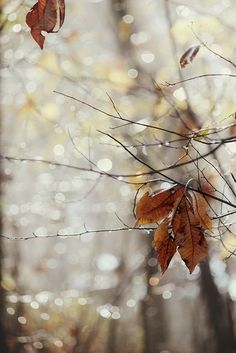Fog is lifting… by ..Ania. on Flickr(via Pinterest: Discover and save creative ideas)