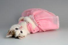 Cinderella'nın Kaybettiği Ayakkabıyı Giyseler Hiç Sırıtmayacak 24 Piremsesler Piremsesi Kedicik