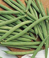 Bush, Fordhook Standard Fantastic Filet Bean Seeds and Plants, Vegetable Seeds at Burpee.com