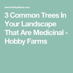 3 Common Trees In Your Landscape That Are Medicinal - Hobby Farms