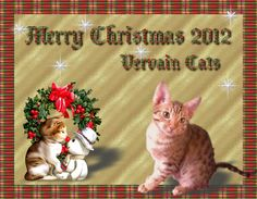 Christmas Greetings from   Vervain Cats   www.fb.com/VervainCats